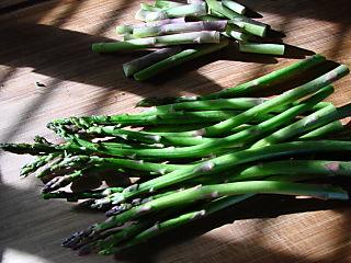 Asparagus in sunshine