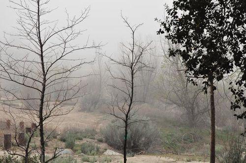 Misty eve one