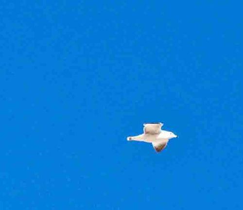 New plane sea gulls